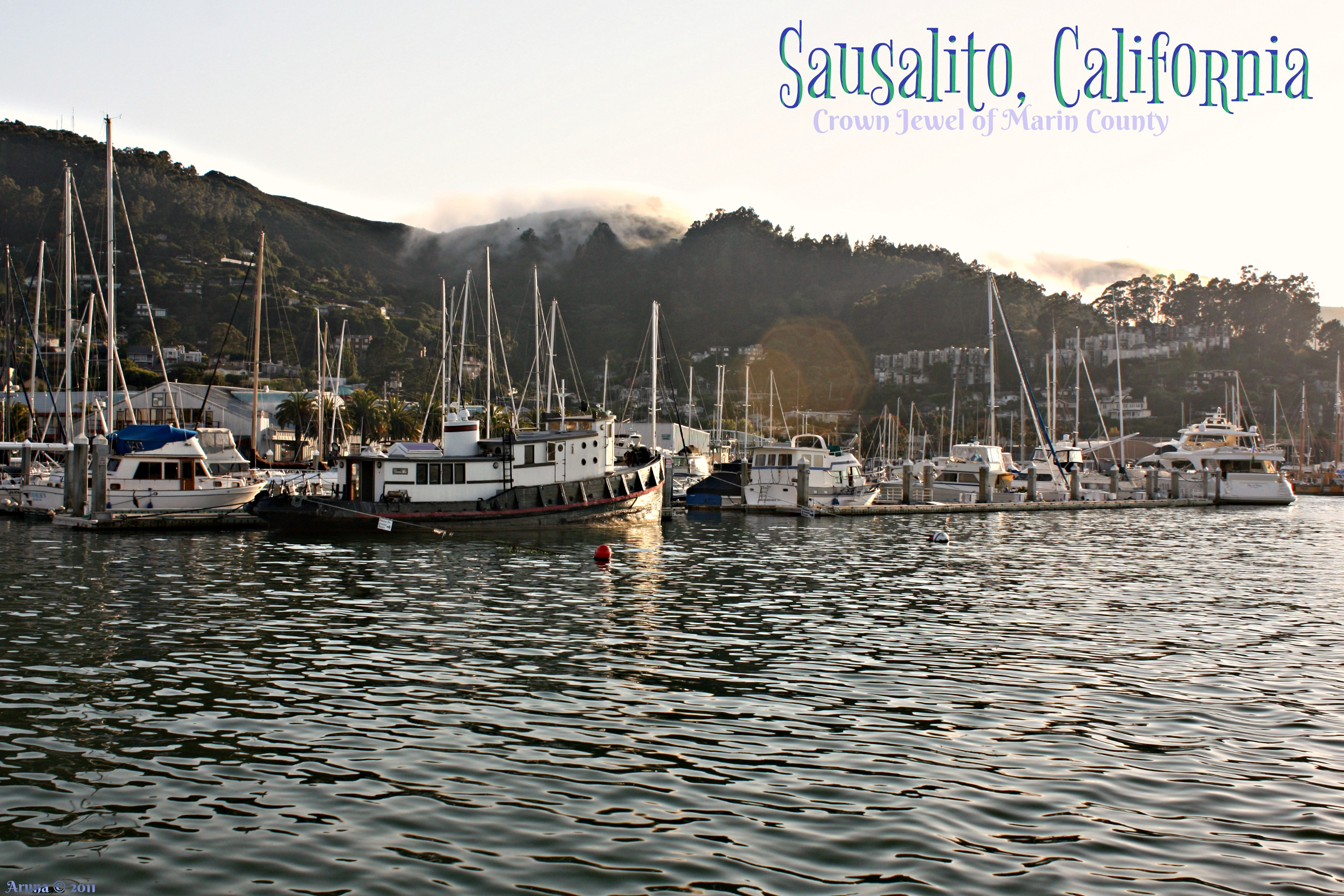 C - Loving Life in Sausalito (postcard) -signed